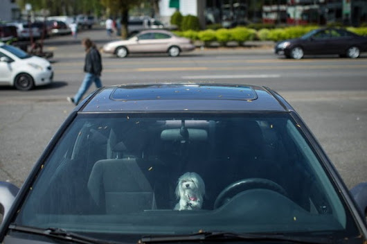 Pets in hot cars: How to know when to get involved