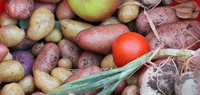 Harvest crop