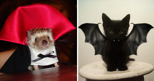 25+ Terrifyingly Cute Halloween Costumes For Pets