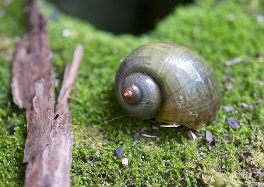 a snail's tale (win 'the sound of a wild snail eating') - A Way To Garden
