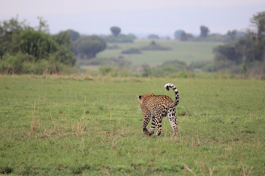 Safari in Uganda: Queen Elizabeth National Park | The Wanderlust Effect