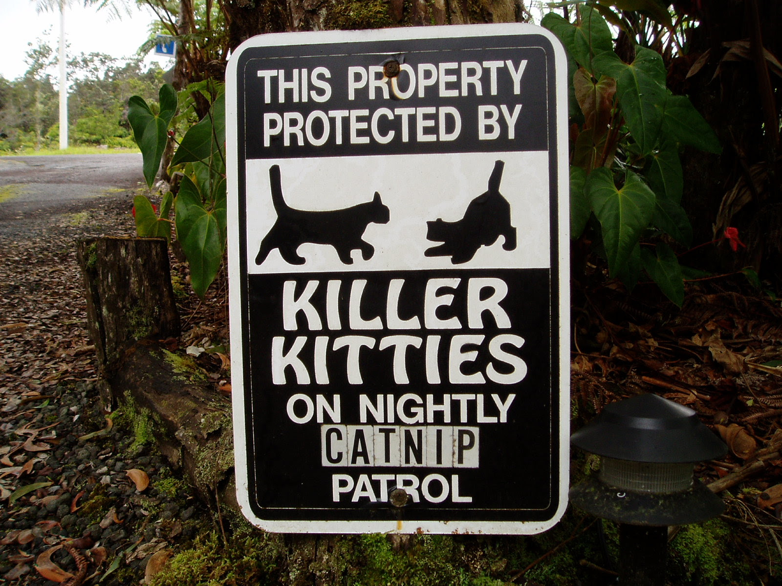 This property protected by killer kitties on nightly catnip patrol