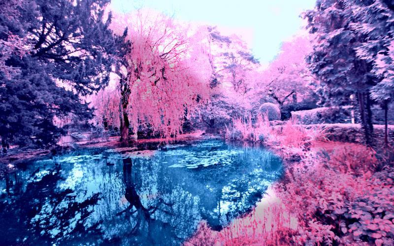 Pink Nature Desktop Backgrounds
