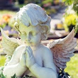 Harley Investments - Burial Plot Shortage in the UK