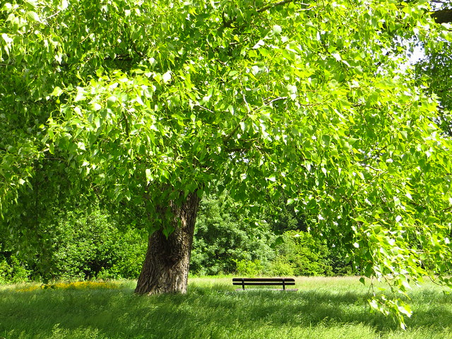 Tree on the Little Tumulus Field