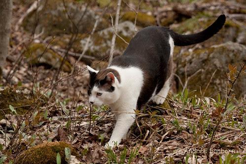 Buddy on a hike-1.jpg