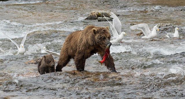 Katmai                                                       National Park and                                                       Preserve, Lake and                                                       Peninsula Borough,                                                       Alaska