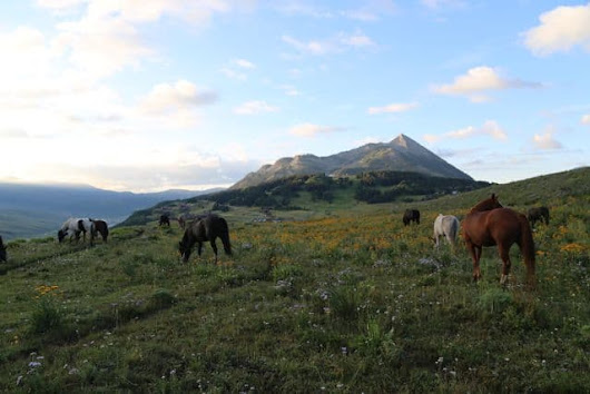 Crested Butte Makes Rare Offering Amongst Influx in Ski Resort Sales - Mirr Ranch Group