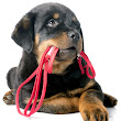Puppy Training Los Angeles and San Fernando Valley | The Dog Savant Sherman Oaks CA.