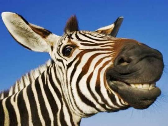 animais-sorrindo-9