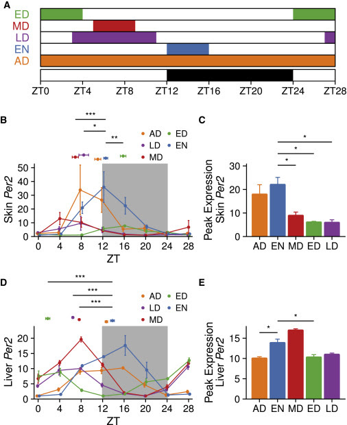 Time-Restricted Feeding Shifts the Skin Circadian Clock and Alters UVB-Induced DNA Damage