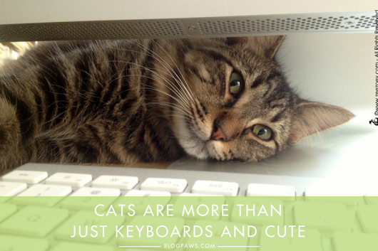 Break Out of Your Blogging Niche to Make Strides in Cat Welfare - BlogPaws
