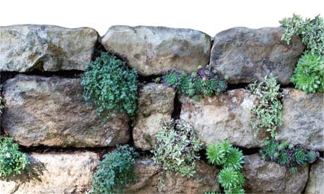 Gardens: Dry stone walls