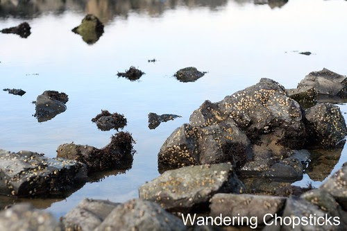 6 Searching for Tide Pools 9
