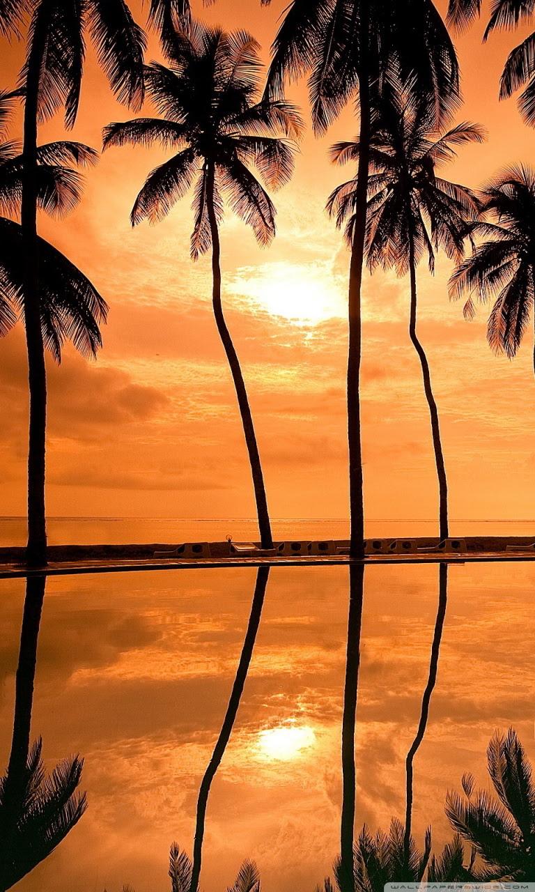 Hawaii Sunset Beach Hd Wallpaper Wallpapers Box