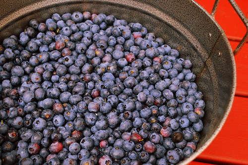 Macombers Blueberry Stand bucketful