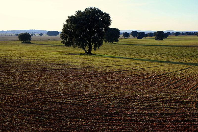 File:Paisaje La Mancha.jpg