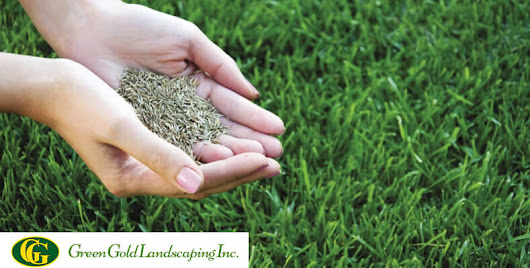 When to Plant Grass Seed? - Green Gold Landscaping Inc