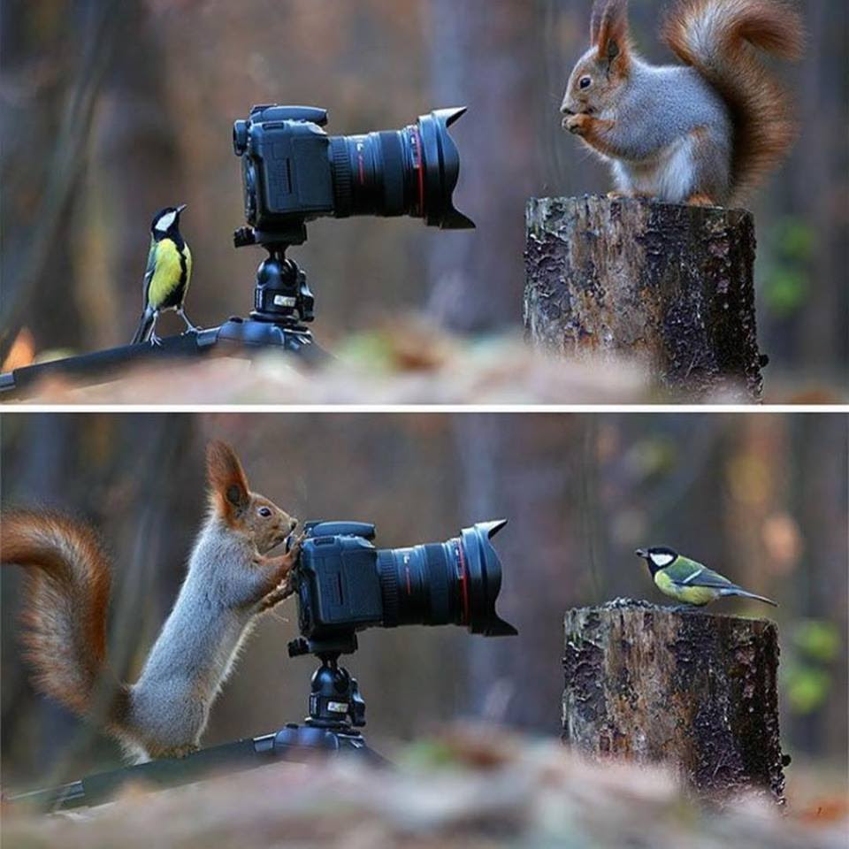 Wildlife Photography idea by Vadimtrunov