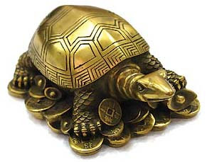 Keeping of tortoise at home by Guruji Shri Narendra Babu Sharmaji