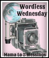 WW camera button