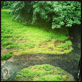 Oh look, it's #raining cats and dogs...again! #pouring #rain #storm
