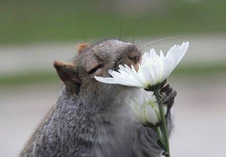 Những hình ảnh cực đáng yêu của loài vật thưởng thức hoa