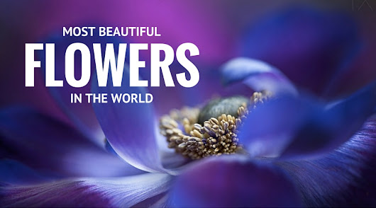 32 Most Beautiful Flowers In The World • Alter Minds
