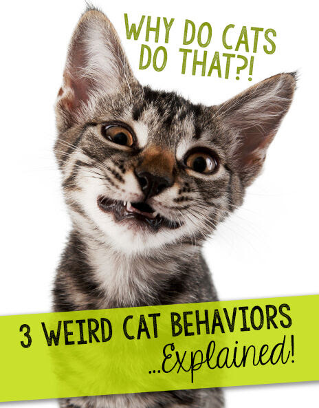 Why Do Cats Do That?! 3 Weird Cat Behaviors…Explained