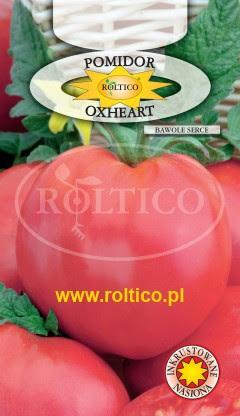 Nasiona Inkrustowane Pomidor Gruntowy Oxheart Malinowy Bawole