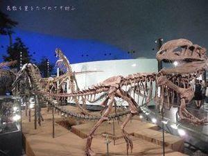 恐竜博物館06.JPG