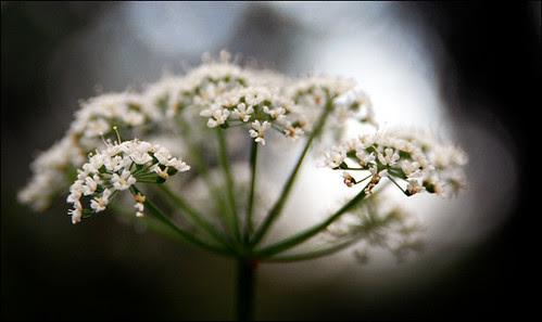 flower_0272