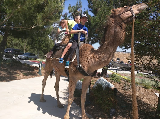 camel rides, pony rides &  traveling petting zoo