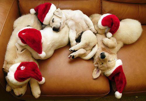 Sempre é Natal