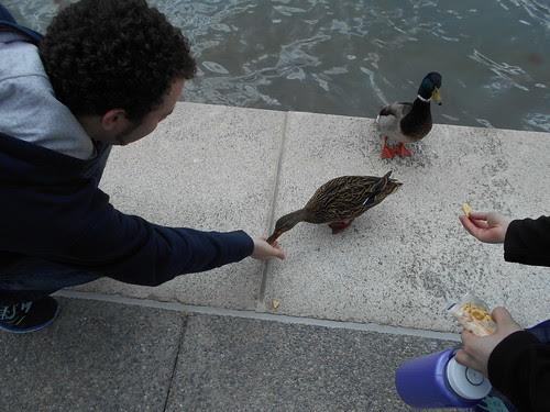 duck feeding (2)