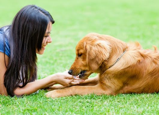Natural Ways to Improve Your Dog's Immune System