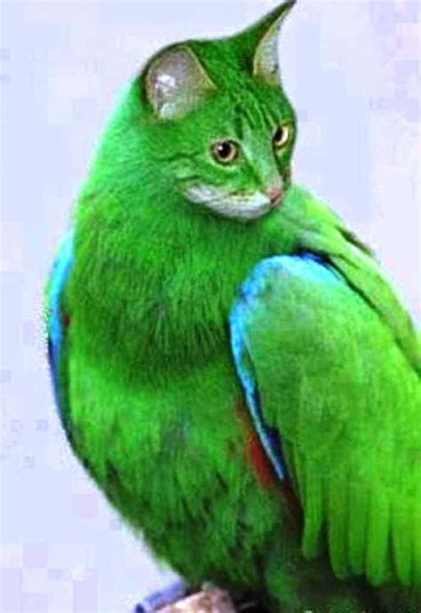 separuh  kucing  burung gambar lucu