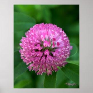 Clover Blossom print