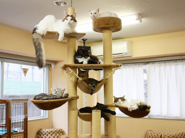 cat cafe chat japon tokyo 3 Cafe Neko No Mise : Le Café des Chats à Tokyo