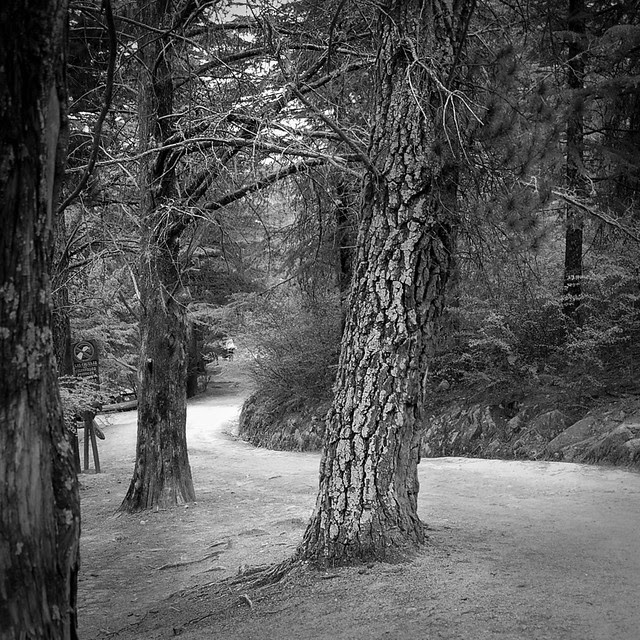 A stroll into the woods