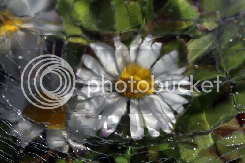 180 3 photo 1803IMG_3745_zps5dad3c63.jpg