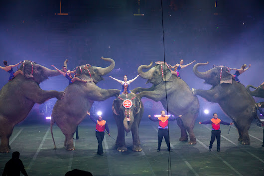 Ringling's Last Elephant Show on Earth · A Humane Nation