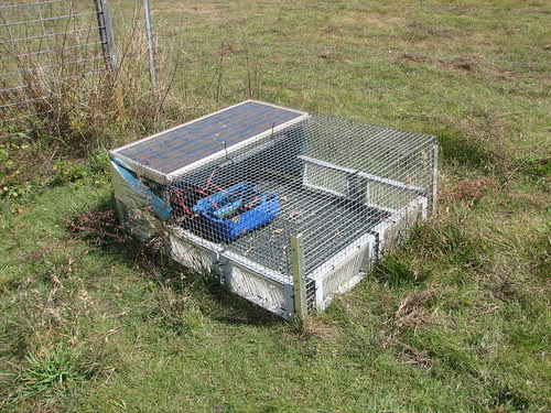 Cane Toad trap,Knuckey's Lagoon