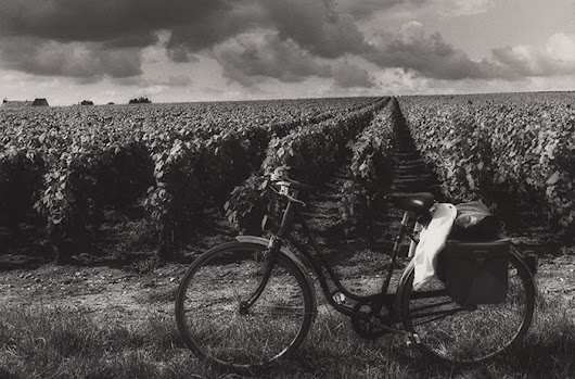 Your Guide to Bicycling Through Wine Country | Wine Enthusiast Magazine