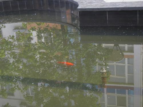Fish in a Pond, Shenyang, China _ 9963