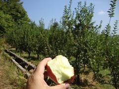 apple orchard pelion
