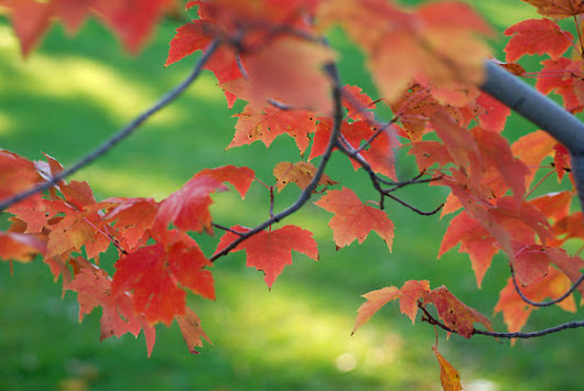 Green Actions You Can Take This Autumn - Biofriendly Planet Magazine