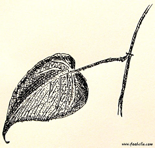 pen and ink plant study