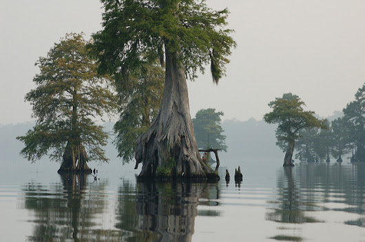 Fall into Lore at Great Dismal Swamp