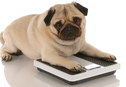 How to avoid pet obesity problems and keep them healthy - Movie TV Tech Geeks News